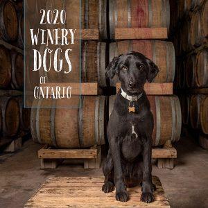 Black dog sitting in front of wine barrels