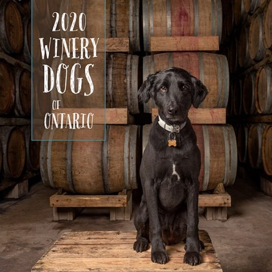 Black dog sitting in front of wine barrels